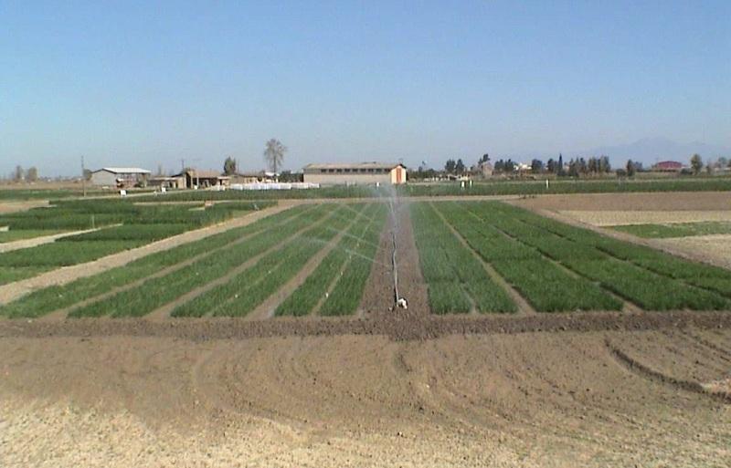wheat irrigation2 ساخت برنامه جذاب و جالب و خوب رادیویی با موضوعآبیاری گیاهان زراعی و همچنين باغیبه همت پژوهشگر قسمت و بخش تحقیقات فنی و همچنين مهندسی مرکز تحقیقات و همچنين آموزش گلستان