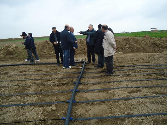 DSC09425 حضور پژوهشگران حاضر در کارگاه آموزشی کشت سالیکورنیا در ایستگاه تحقیقات شوری گلستان