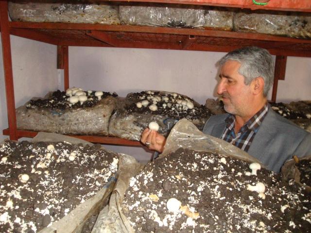 DSC03903 بازدید رییس مرکزتحقیقات و همچنین آموزش گلستان از کارگاه تولید قارچ های خوراکی کاردانش آن مرکز