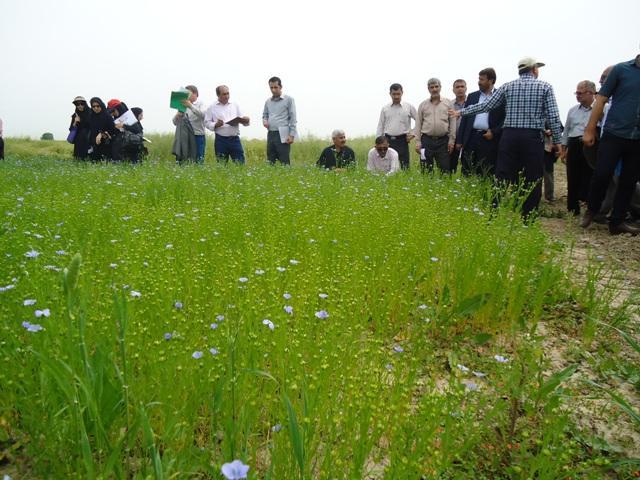 DSC09883 نمایش روز مزرعه کلزا وحبوبات در ایستگاه تحقیقات کشاورزی عراقی محله گرگان