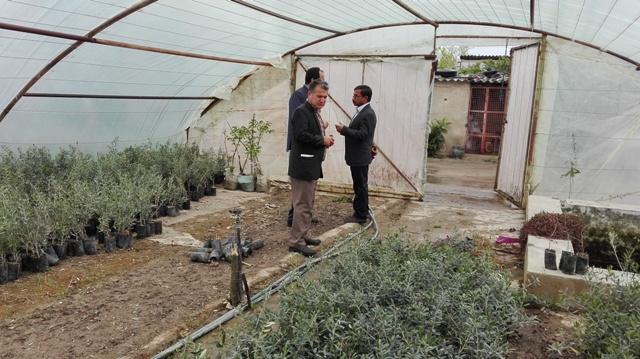 IMG 20160404 101933 بازدید ریاست مرکز تحقیقات و همچنین آموزش گلستان از نهالستان های شرکت تعاونی تولید کنندگان زیتون