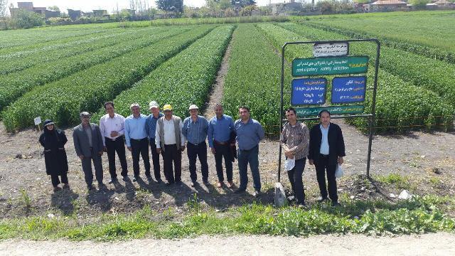photo 2016 04 13 15 34 03 بازدید پژوهشگر قسمت و بخش زراعی و همچنین باغی مرکز تحقیقات و همچنین آموزش گلستان از مزارع گندم واقع در شرق استان