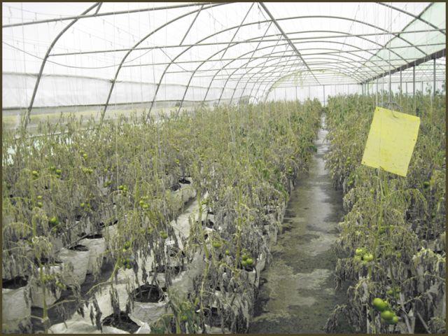 N9801212B بازدید محققان قسمت و بخش تحقیقات زراعی و همچنين باغی مرکز تحقیقات و همچنين آموزش گلستان از منطقه ها و مناطق سیل زده شرق استان