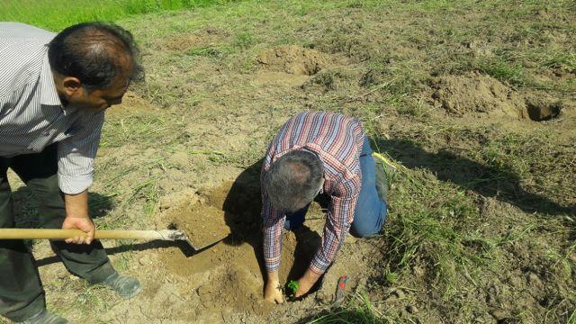 N9802183B کاشت آزمایشی گیاهان دارویی مورد و همچنين گل گاو زبان در ایستگاه تحقیقاتی مراوه تپه توسط محققان قسمت و بخش تحقیقات جنگل ها مرکز تحقیقات و همچنين آموزش گلستان