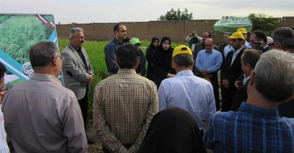 N9806133E برگزاری روز ملی مزرعه خشکه کاری برنجدر مرکز تحقیقات و همچنين آموزش کشاورری و همچنين منابع طبیعی استان گلستان