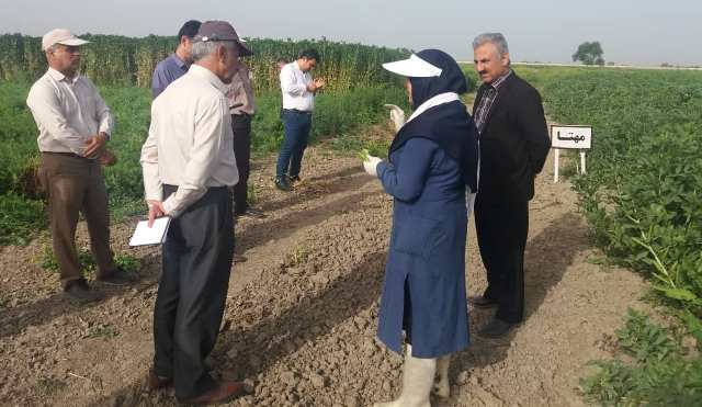 N9902204C بازدید مشاور وزیر و همچنين مجری طرح محوری گندم به همراه مدیر کل غلات و همچنين محصولات اساسی وزارت خانه از طرح های تحقیقاتی ایستگاه عراقی محله گرگان