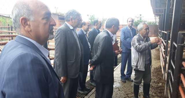 N9902245B 1 بازدید گروهی از مدیران مرکز تحقیقات و همچنين آموزش گلستان از پروژه تولید قوچ اصلاح نژاد شده