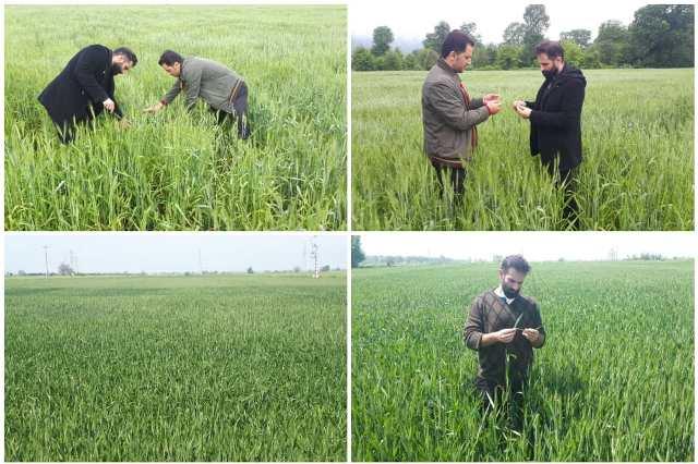 N904103B اجرای برنامه جذاب و جالب و خوب بازدید و همچنين کنترل فرایند تولید بذر به همت کارشناسان واحد ثبت و همچنين گواهی مرکز تحقیقات و همچنين آموزش گلستان