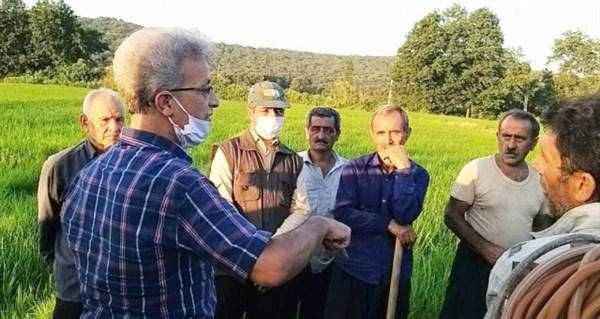 N9905011B برگزاری کارگاه آموزشی مدیریت آفات و همچنين بیماریهای برنج در چارچوب طرح یاوران تولید به همت محققان مرکز تحقیقات و همچنين آموزش گلستان
