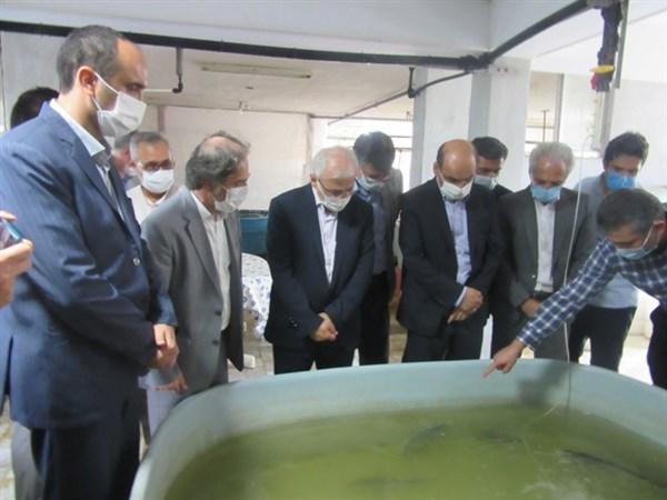 N9905154B بازدیددکتر بازرگان دست يار وزیر جهاد کشاورزیاز ایستگاه تحقیقات شیلات قره سو