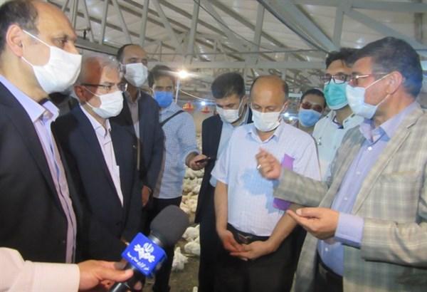 N9905155C بازدیددکتر بازرگان دست يار وزیر جهاد کشاورزیاز پروژه بررسی امکان بهره بري و استفاده از باقلا در جیره جوجههای گوشتی