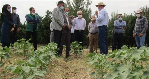 N9905222B بازدیددکتر بازرگان دست يار وزیر جهاد کشاورزیاز سامانه کشت ریز دایم در شهرستان کردکویاستان گلستان