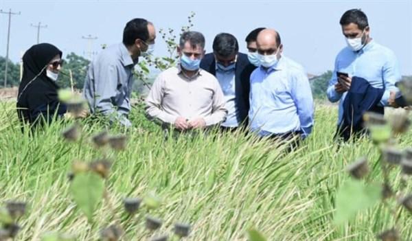 N9906221C بازدید استاندار گلستان از طرح های تحقیقاتی مرکز تحقیقات و همچنين آموزش کشاورزی و همچنين منابع طبیعی