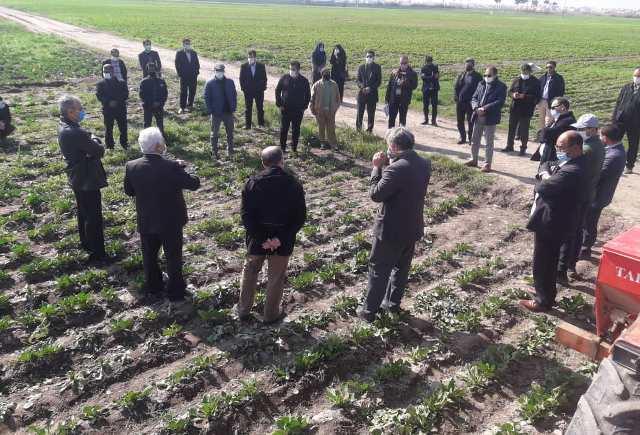 N9912093B برگزاری روز مزرعه چغندرقند در ایستگاه تحقیقات کشاورزی گنبد کاووس