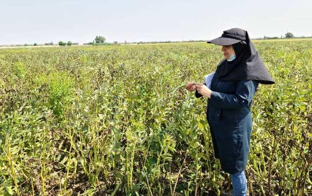 %name اقدامات کنترل روند و همچنين فرایند تولید بذر و همچنين بازدید مزارع به همت کارشناسان واحد ثبت و همچنين گواهی مرکز تحقیقات و همچنين آموزش گلستان